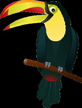 toucan-154521_1280